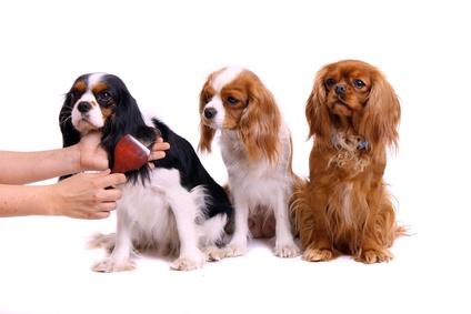 drei Hunde bei Fellpflege