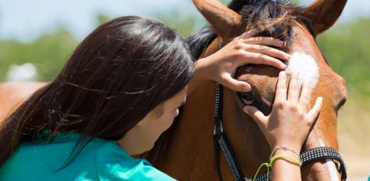 Zeckenbiss bei einem Pferd